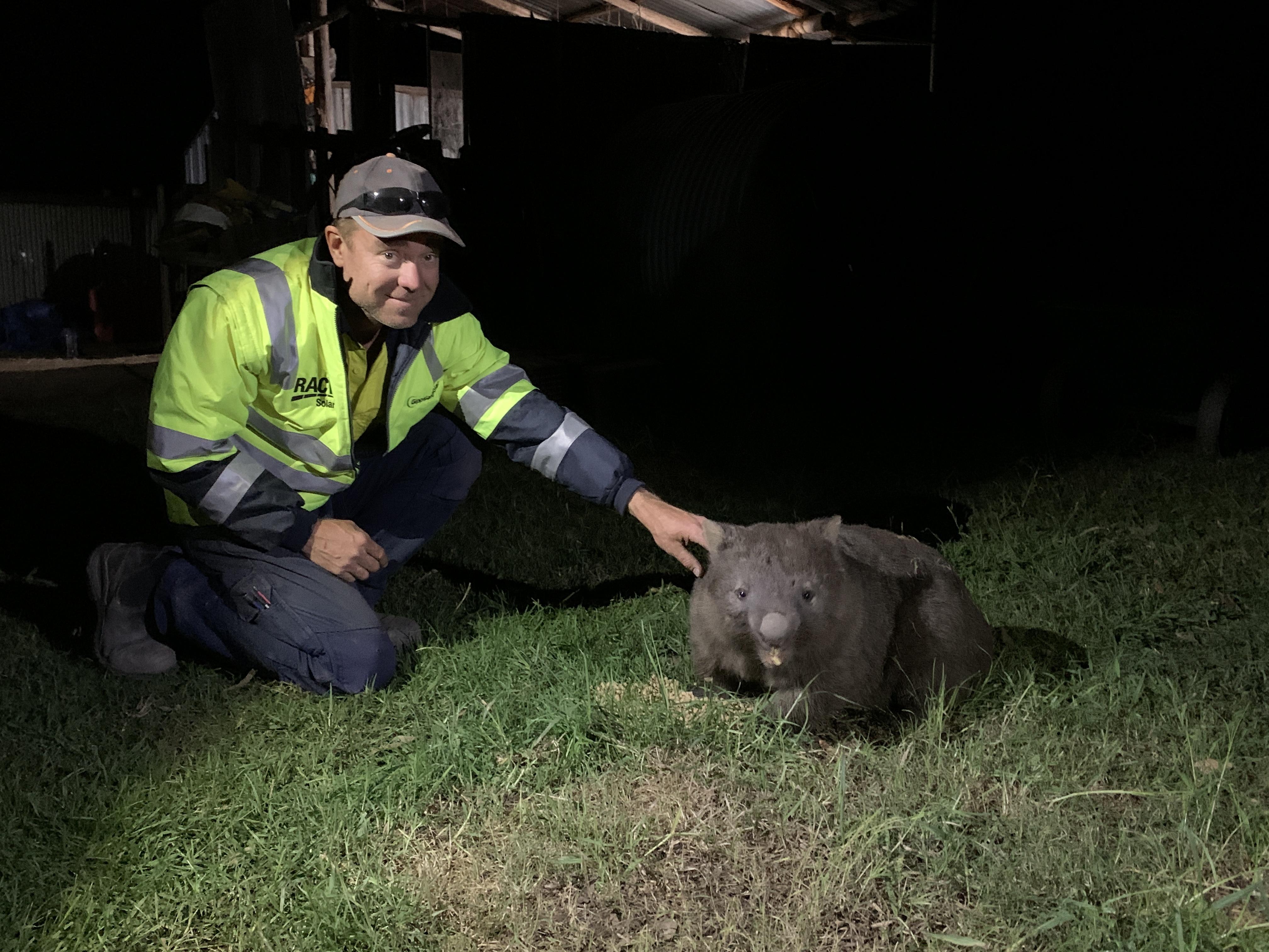 Wombat orphanage